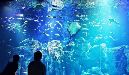 男鹿水族館GAO巨大水族箱