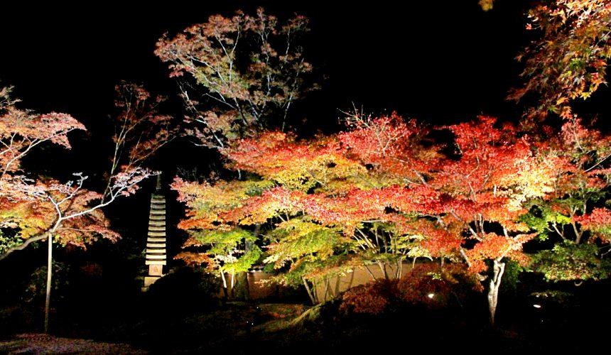 圓通院的秋季點燈活動