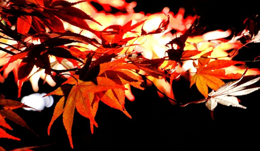 圓通院秋季時的夜楓點燈