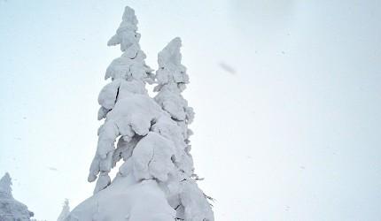 森吉山阿仁滑雪場樹冰