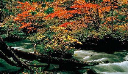 東北自駕賞楓景點青森奧入瀨溪流