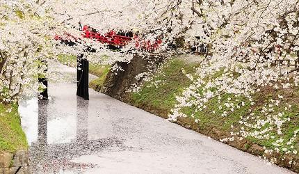 日本青森弘前的弘前城附近河畔的樱花美景