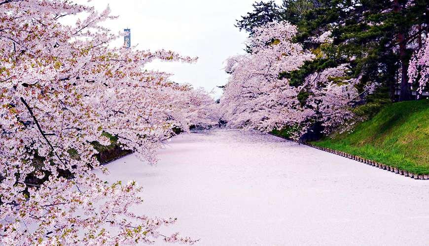 日本青森弘前不只睡魔祭!绝美樱花粉红河、红叶点灯必去四大祭典总整理