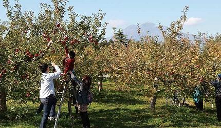 青森弘前蘋果公園內天氣好時還能看到遠山繚繞