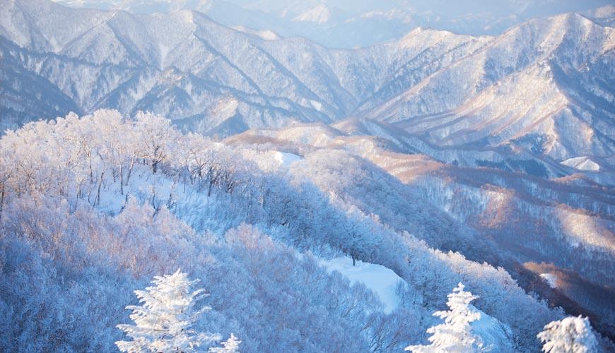 日本东北福岛会津高原上鸟瞰树冰