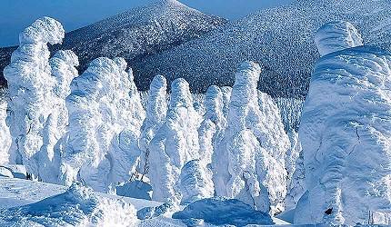冬季東北景點推薦宮城縣藏王樹冰