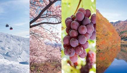 愛酒人士日本自由行的最佳地點山形一年四季的必玩樹冰、摘水果、櫻花、紅葉、楓葉組圖